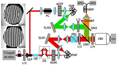 Basic design of an adaptive optics STED microscope (from Adaptive optics enables 3D STED microscopy in aberrating specimens by Travis J. Gould, Daniel Burke, Joerg Bewersdorf, and Martin J. Booth). Adaptive optics helps to correct aberrations often caused by biological samples. Image OSA Publishing, www.osapublishing.org/oe/fulltext.cfm?uri=oe-20-19-20998&id=241056